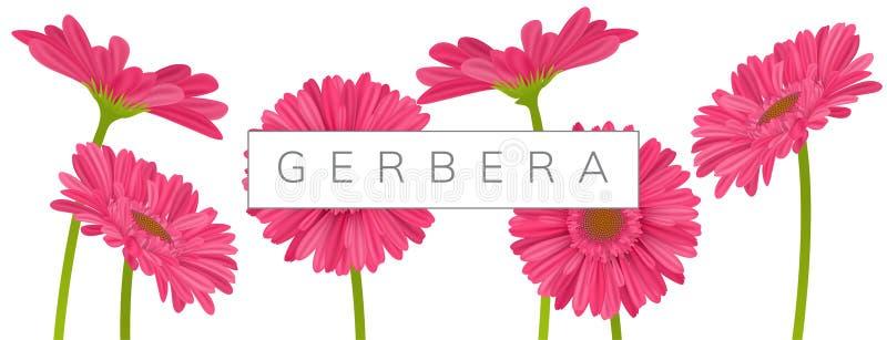 Οριζόντιο έμβλημα με τα ρόδινα λουλούδια μαργαριτών gerbera απεικόνιση αποθεμάτων