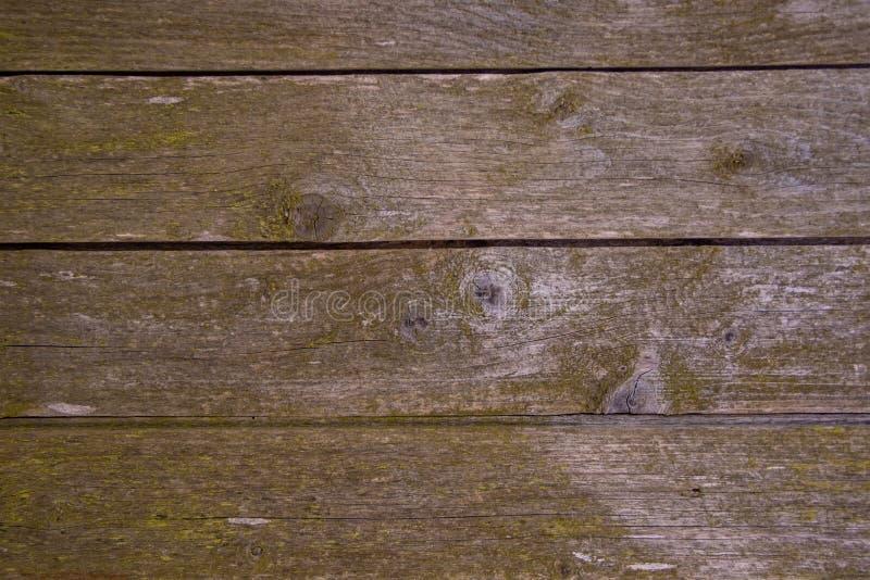 Οριζόντιο υπόβαθρο του παλαιού ξύλου με το βρύο στοκ φωτογραφία