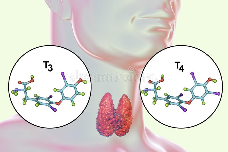 Ορμόνες του θυροειδούς αδένα T3 και T4 διανυσματική απεικόνιση
