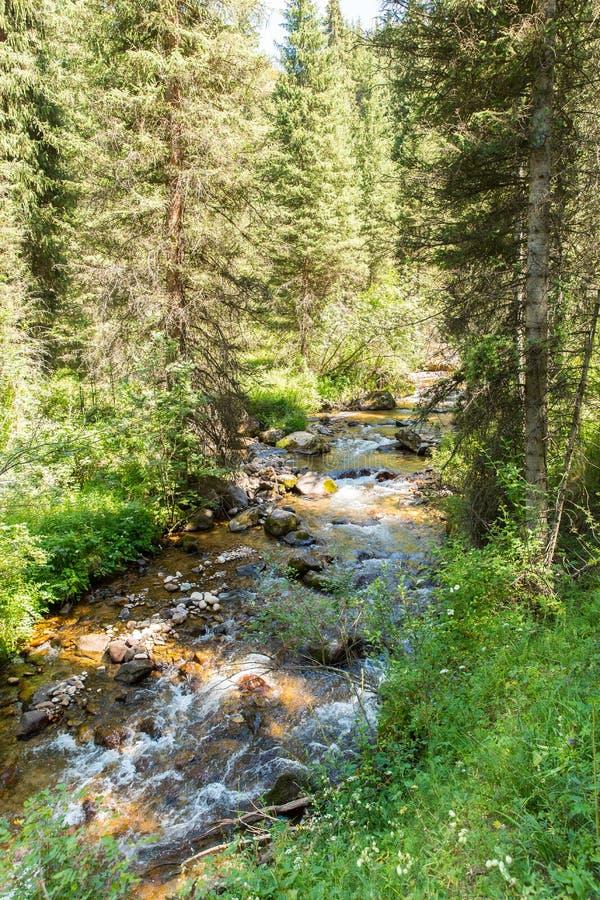 Οροπέδιο Assy στο βουνό της Τιέν Σαν στο Αλμάτι, Καζακστάν, Ασία στο καλοκαίρι στοκ εικόνες με δικαίωμα ελεύθερης χρήσης