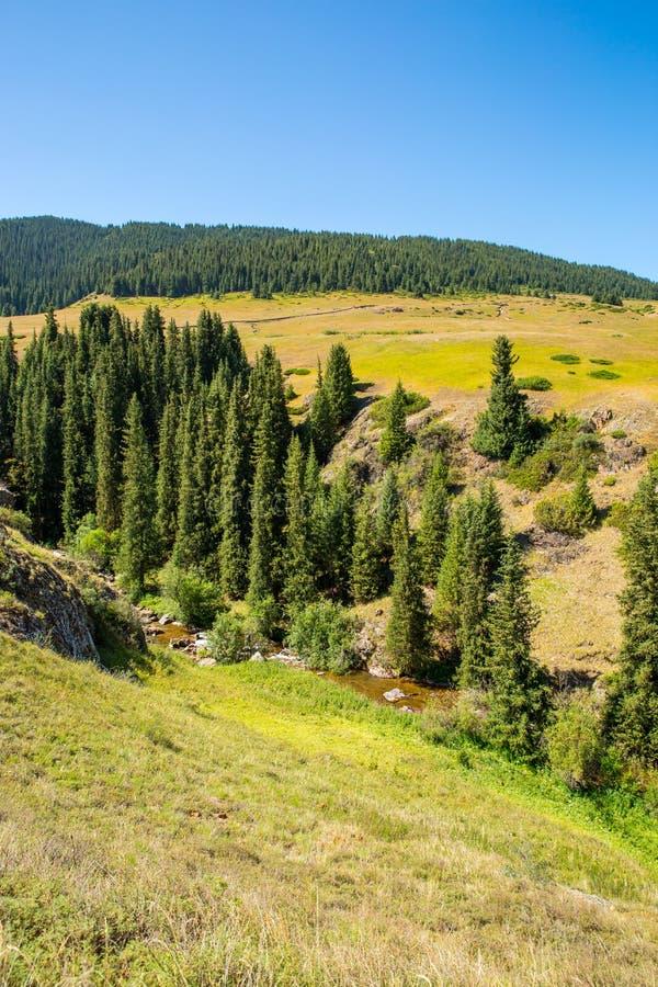 Οροπέδιο Assy στο βουνό της Τιέν Σαν στο Αλμάτι, Καζακστάν, Ασία στο καλοκαίρι στοκ φωτογραφία