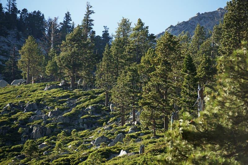 Οροσειρά δάσος της Νεβάδας στοκ εικόνες