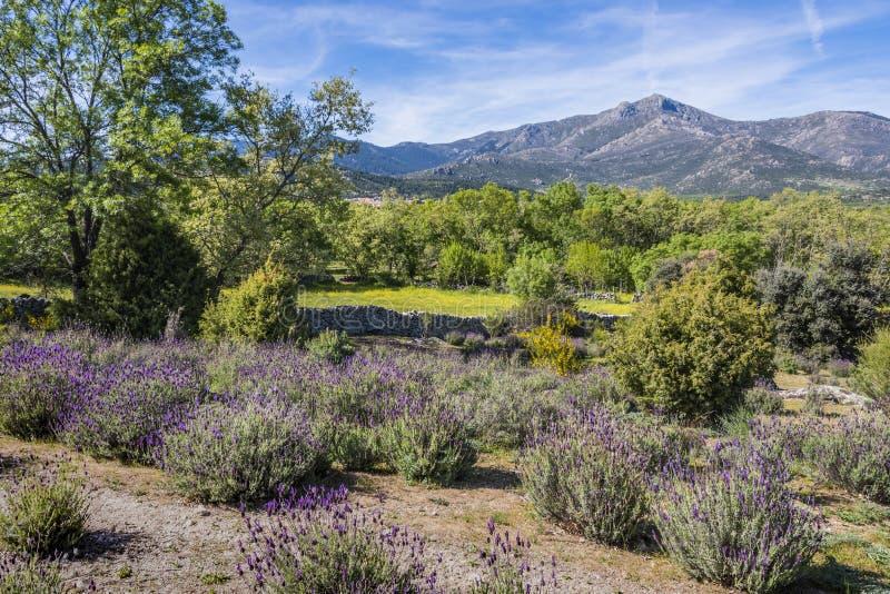 Οροσειρά τοπίο άνοιξη de guadarrama Μαδρίτη Ισπανία στοκ φωτογραφία