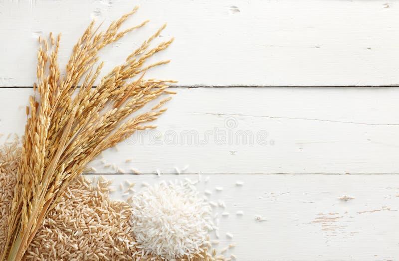 Ορυζώνας και ρύζι στοκ φωτογραφία