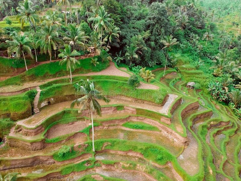 Ορυζώνες ρυζιού και δάση στο Μπαλί, η άποψη από την κορυφή στοκ εικόνα