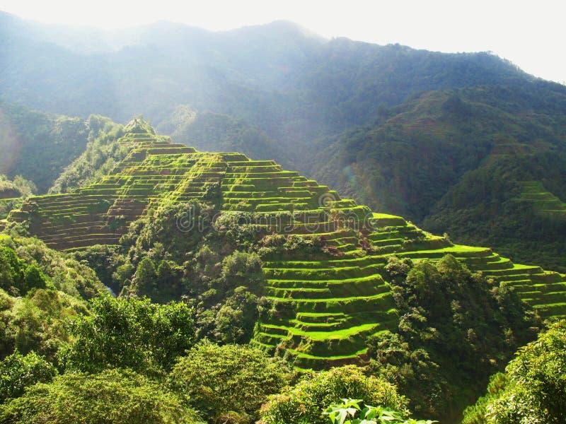 Ορυζώνες ρυζιού στις Φιλιππίνες στοκ φωτογραφία με δικαίωμα ελεύθερης χρήσης