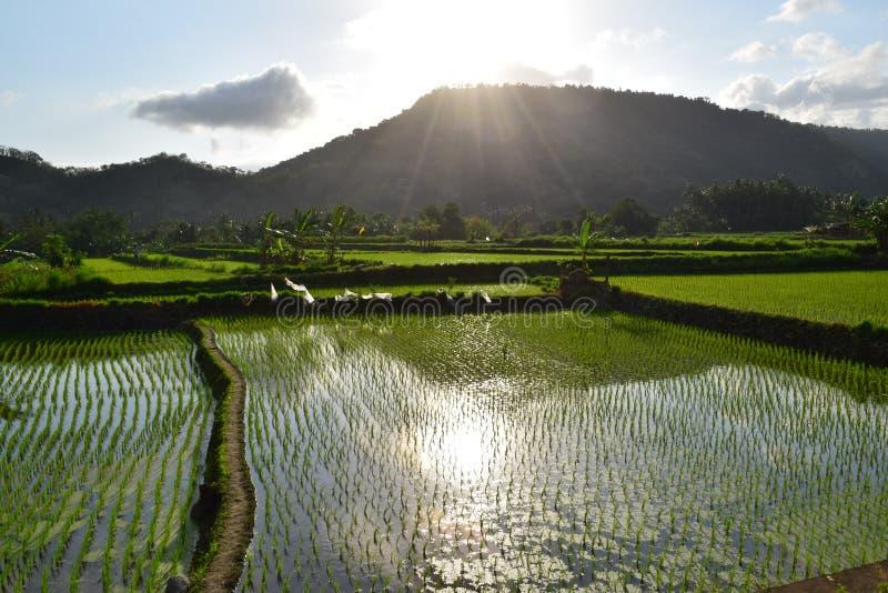 Ορυζώνες ρυζιού στοκ εικόνες με δικαίωμα ελεύθερης χρήσης