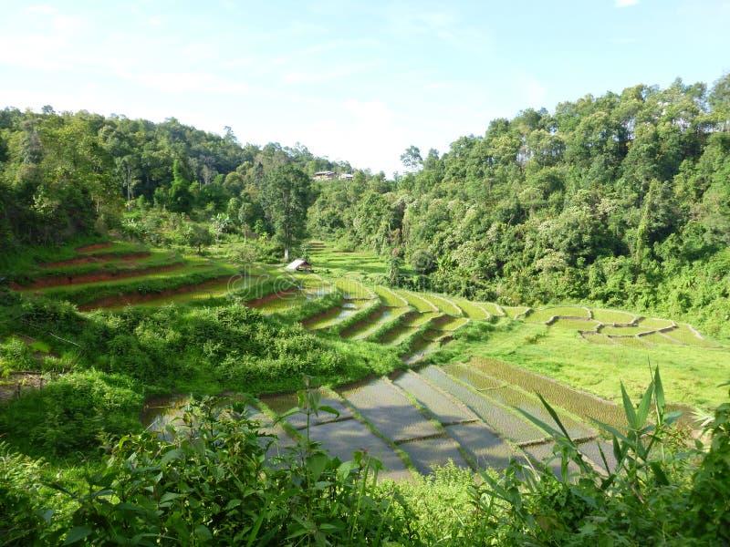 Ορυζώνες ρυζιού Chaing Mai στοκ φωτογραφίες