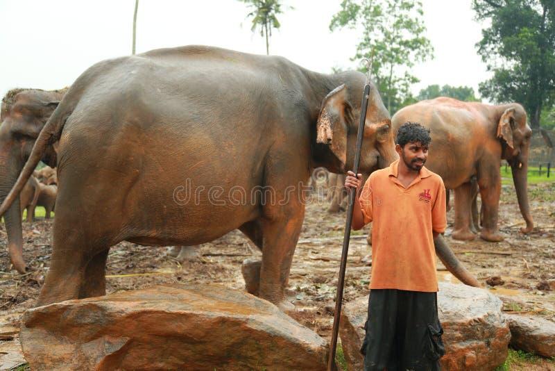 Ορφανοτροφείο ελεφάντων, Σρι Λάνκα στοκ φωτογραφίες με δικαίωμα ελεύθερης χρήσης