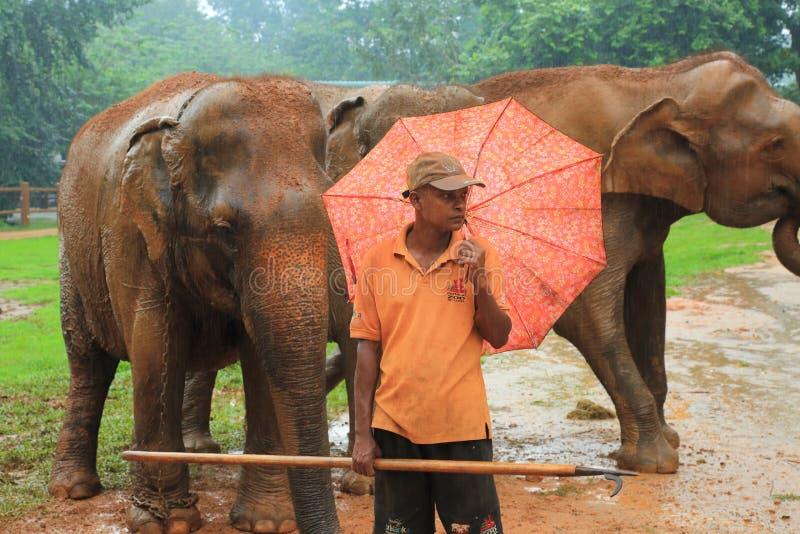 Ορφανοτροφείο ελεφάντων, Σρι Λάνκα στοκ εικόνες