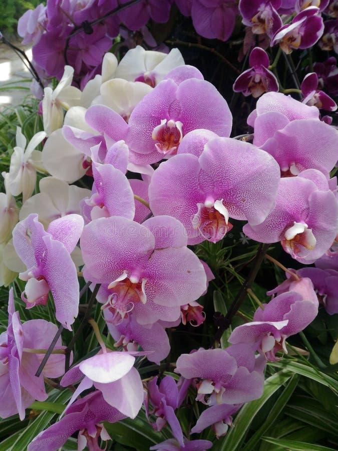 Ορχιδέα, εγκαταστάσεις, λουλούδι, όμορφος, εξωτικός, τροπικό, οφθαλμός, πράσινος, ρόδινος, άσπρος, χλόη, πανίδα, φύση, κλάδος, χτ στοκ φωτογραφίες με δικαίωμα ελεύθερης χρήσης
