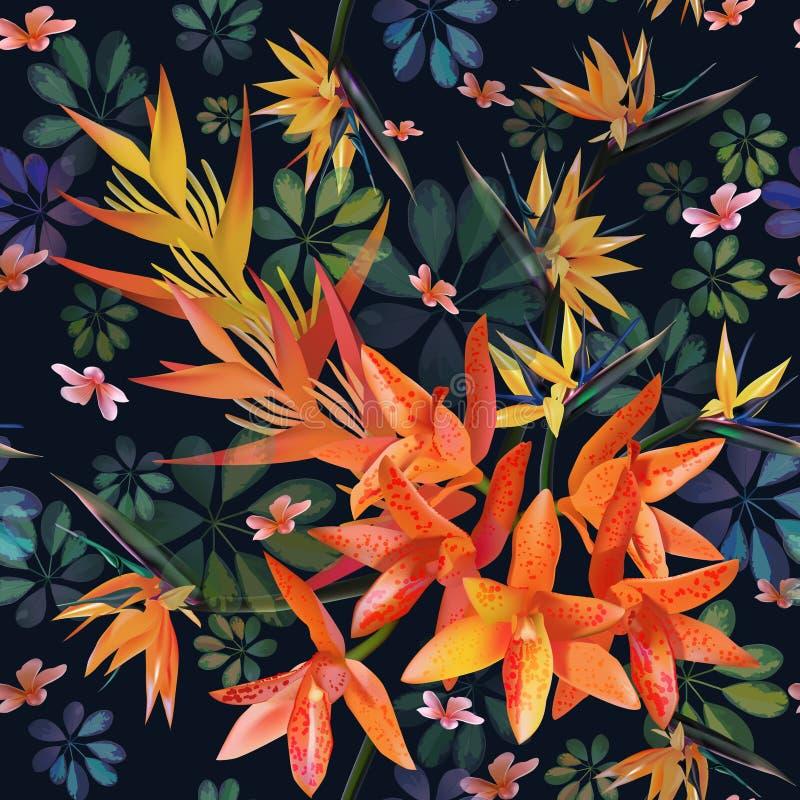 Ορχιδέα, σχέδιο Strylitzia Τροπικό λουλούδι, άνευ ραφής σχέδιο συστάδων ανθών Όμορφο υπόβαθρο με τα τροπικά λουλούδια, εγκαταστάσ απεικόνιση αποθεμάτων