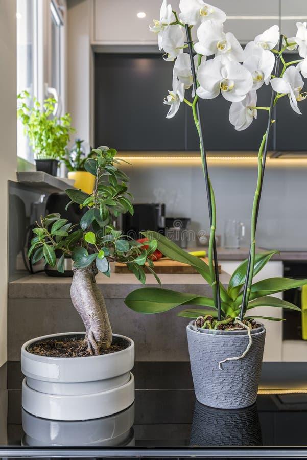 Ορχιδέες στα δοχεία λουλουδιών στη σύγχρονη κουζίνα στοκ εικόνες