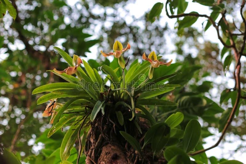 Ορχιδέες στο τροπικό δάσος στοκ εικόνα