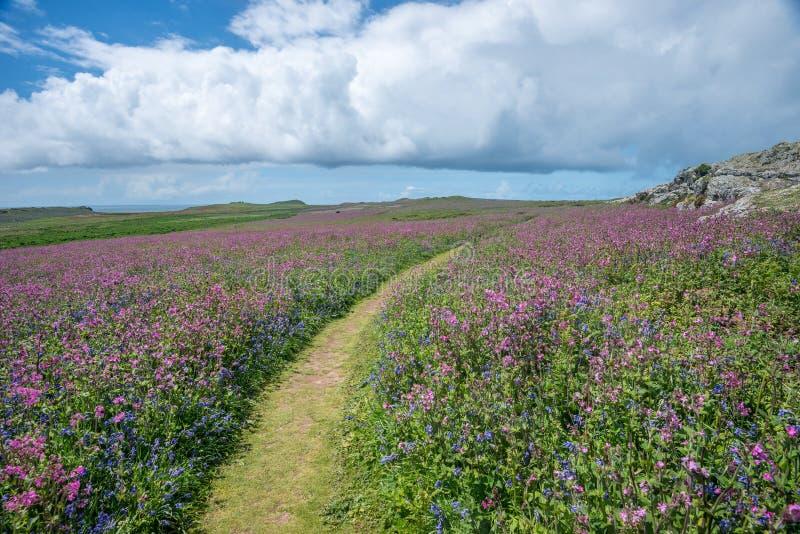 Ουαλλέζικα άγρια λουλούδια στοκ φωτογραφία με δικαίωμα ελεύθερης χρήσης