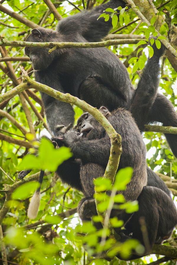 Ουγκάντα στοκ εικόνα με δικαίωμα ελεύθερης χρήσης