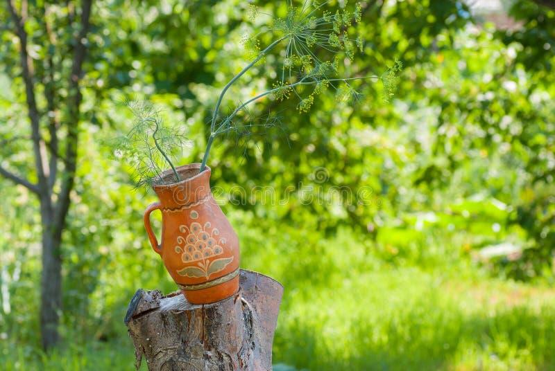 Ουκρανικό δοχείο αργίλου με τον κλάδο των εγκαταστάσεων άνηθου που στέκεται σε ένα δέντρο περικοπών στο θερινό κήπο στοκ εικόνες