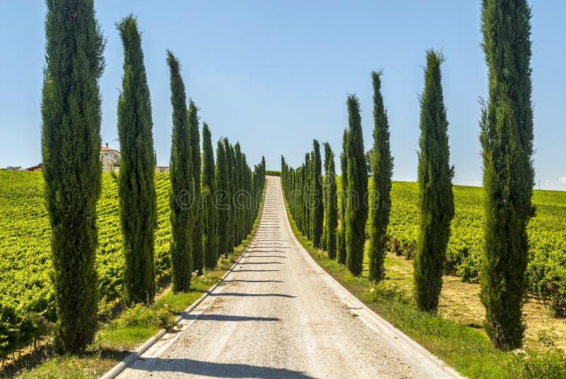 Ουμβρία - δρόμος με τα κυπαρίσσια στοκ εικόνα