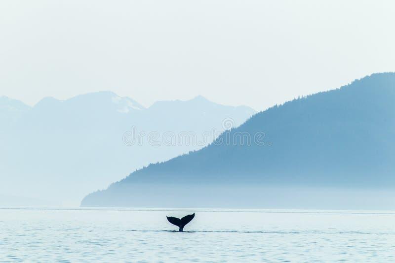 Ουρά και βουνά φαλαινών Humpback στοκ εικόνα με δικαίωμα ελεύθερης χρήσης