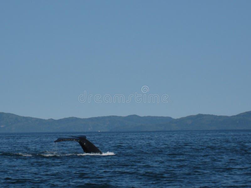 Ουρά φαλαινών κοντά σε Kake στοκ φωτογραφία με δικαίωμα ελεύθερης χρήσης