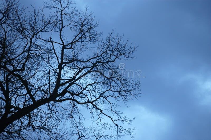 Ουρανοί Coudy στοκ εικόνες