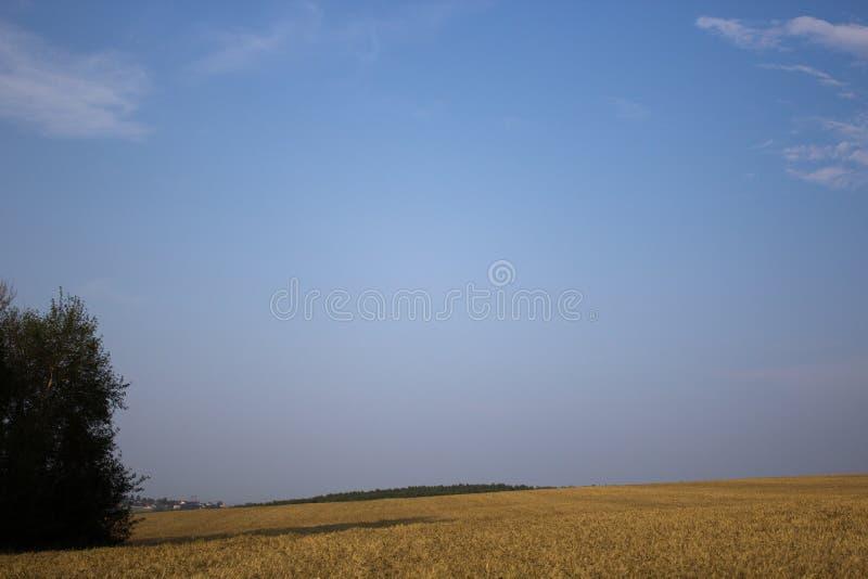 Ουρανός Тhe πέρα από έναν τομέα των βρωμών στοκ φωτογραφία με δικαίωμα ελεύθερης χρήσης