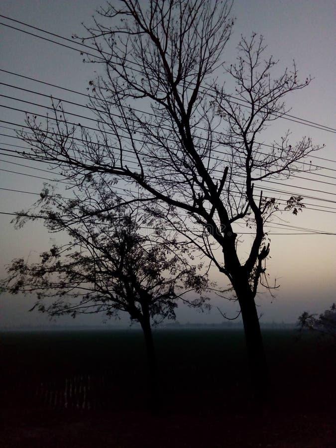 Ουρανός δέντρων ηλιοβασιλέματος στοκ εικόνα με δικαίωμα ελεύθερης χρήσης