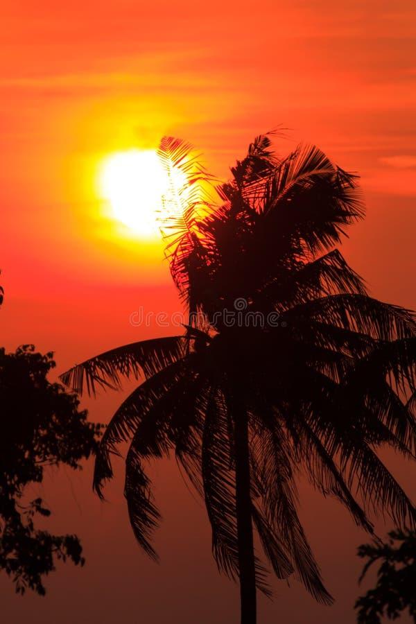 Ουρανός ηλιοβασιλέματος και δέντρο καρύδων σκιαγραφιών σύννεφων στοκ φωτογραφία με δικαίωμα ελεύθερης χρήσης