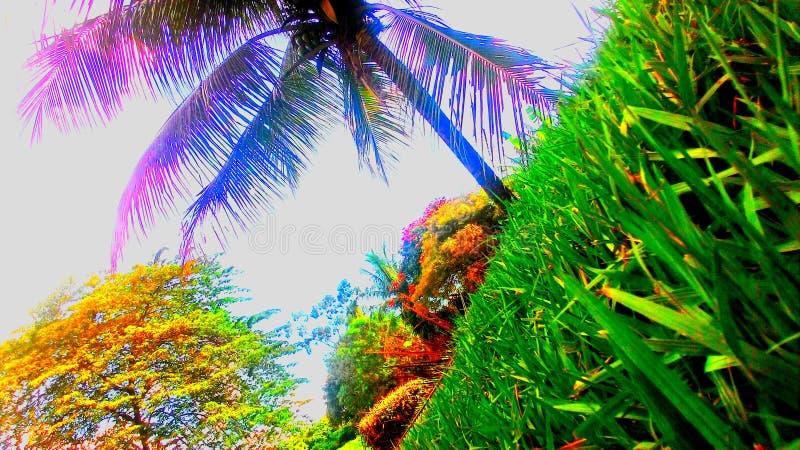 Ουρανός κήπων Coqueiro στοκ εικόνες