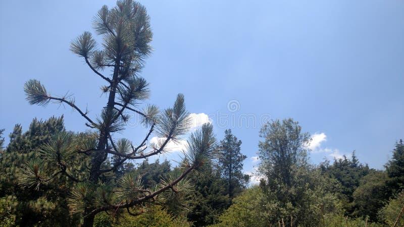 Ουρανός και δέντρα στοκ εικόνες