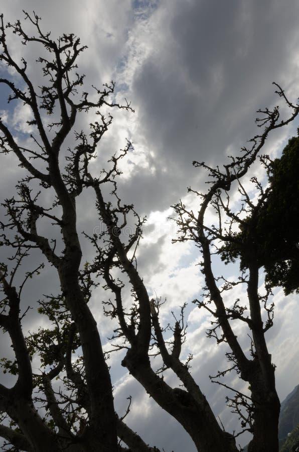 Ουρανός μέσω των δέντρων στοκ φωτογραφία