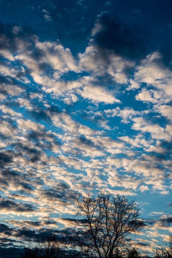 Ουρανός με τα σύννεφα και το δέντρο στοκ φωτογραφίες