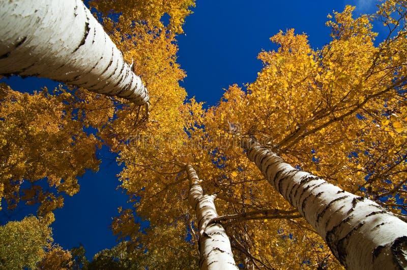 Download ουρανός Οκτωβρίου στοκ εικόνα. εικόνα από καλοκαίρι, πτώση - 1534409