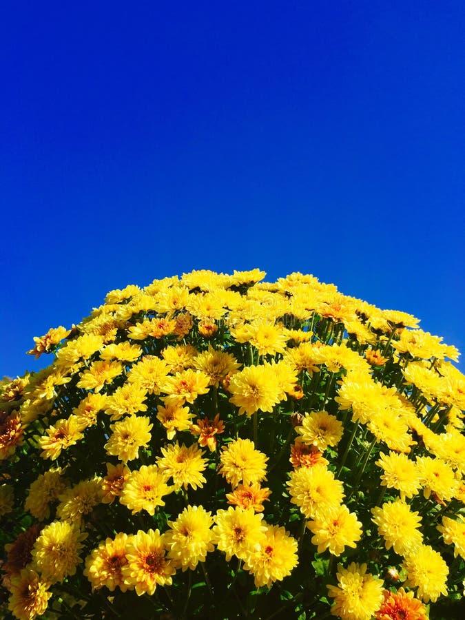 Ουρανός Οκτωβρίου στοκ εικόνα με δικαίωμα ελεύθερης χρήσης