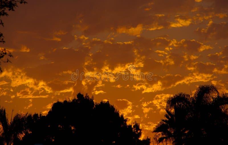 Ουρανός στην πυρκαγιά Ηλιοβασίλεμα lanscape με τα χρυσά σύννεφα ενάντια στα σκιαγραφημένα δέντρα στοκ φωτογραφία
