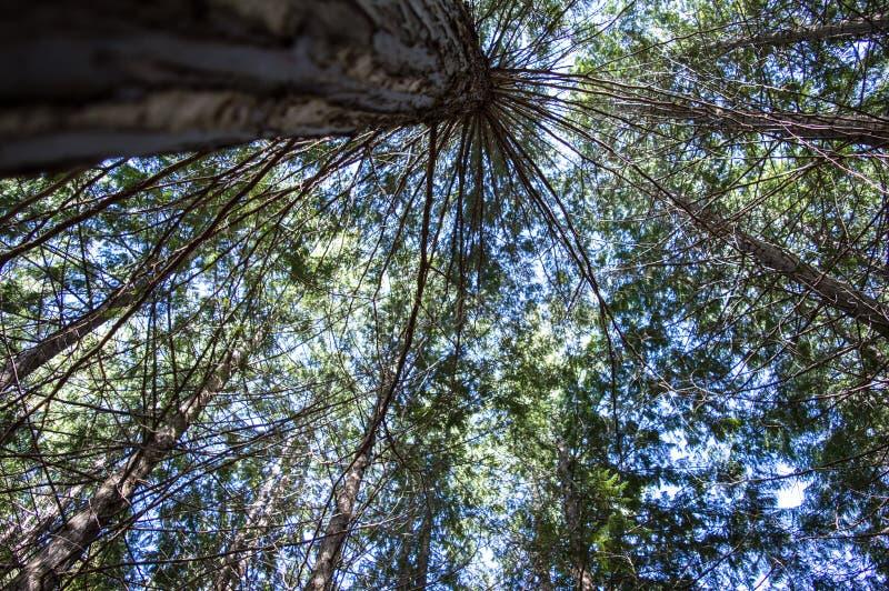 Ουρανός - υψηλό δέντρο στοκ φωτογραφίες
