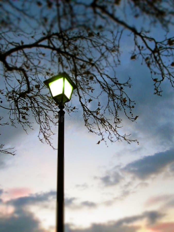 Ουρανός φωτός και ξημερώματος λαμπτήρων πρωινού κάτω από τον κλάδο στοκ εικόνες