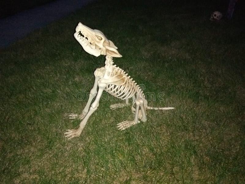Ουρλιάζοντας σκελετός σκυλιών στοκ εικόνες με δικαίωμα ελεύθερης χρήσης