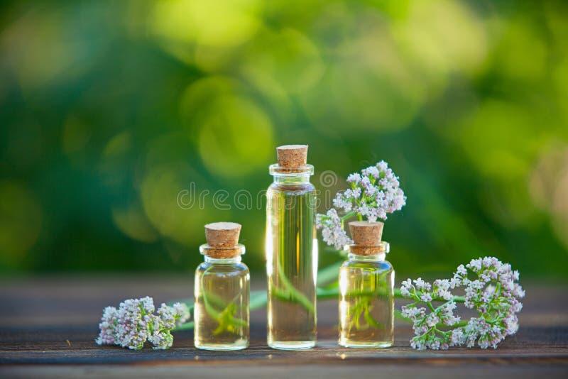 Ουσία των λουλουδιών στον πίνακα στο όμορφο βάζο γυαλιού στοκ εικόνα