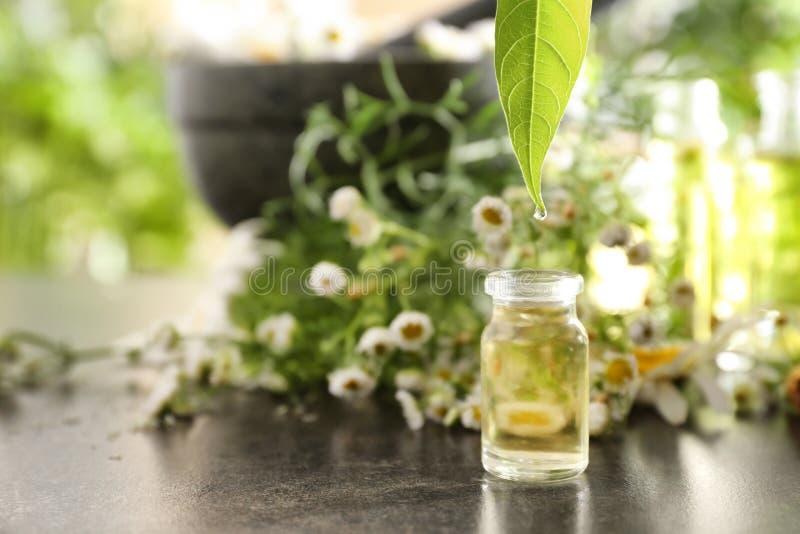 Ουσιαστικό πετρέλαιο Chamomile που στάζει από το πράσινο φύλλο στο μπουκάλι στον πίνακα στοκ φωτογραφία με δικαίωμα ελεύθερης χρήσης