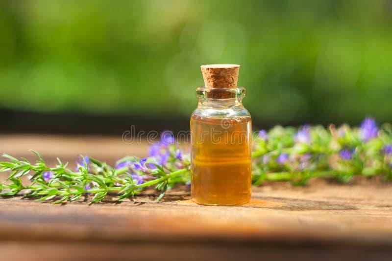 Ουσιαστικό πετρέλαιο Hyssop στο όμορφο μπουκάλι στον πίνακα στοκ φωτογραφία με δικαίωμα ελεύθερης χρήσης