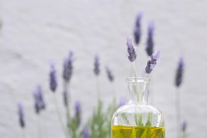 ουσιαστικό lavender λουλου&del στοκ φωτογραφίες με δικαίωμα ελεύθερης χρήσης