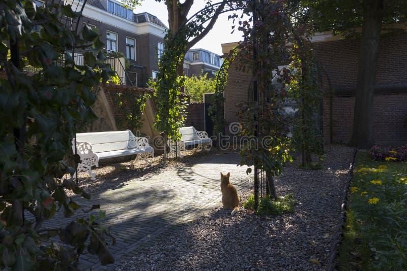 Ουτρέχτη, Κάτω Χώρες - 27 Σεπτεμβρίου 2018: Γάτα στον κήπο στοκ εικόνες