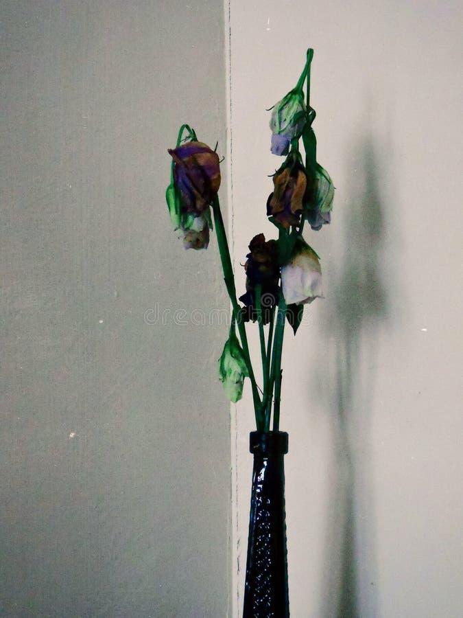 λουλούδια θανάτου στοκ φωτογραφίες
