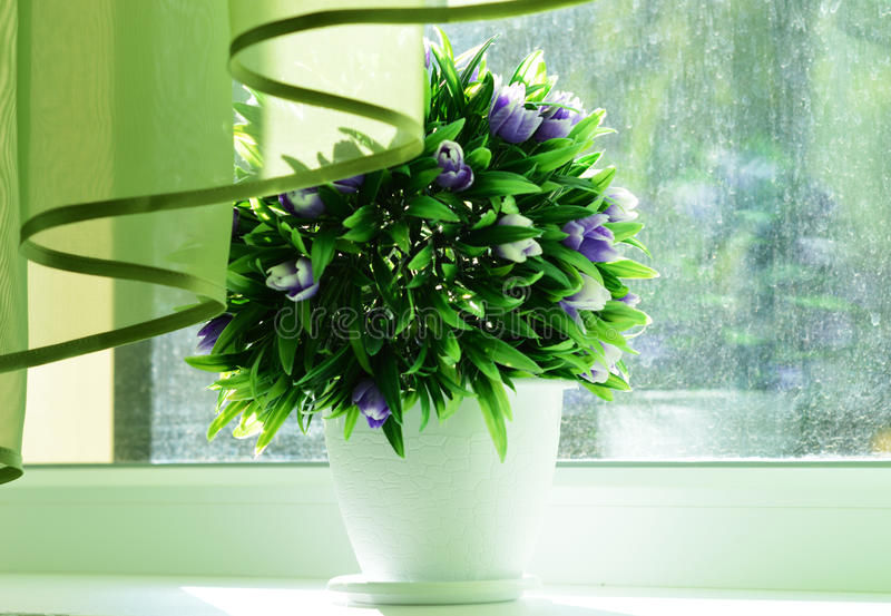λουλούδια δοχείων στοκ φωτογραφία με δικαίωμα ελεύθερης χρήσης
