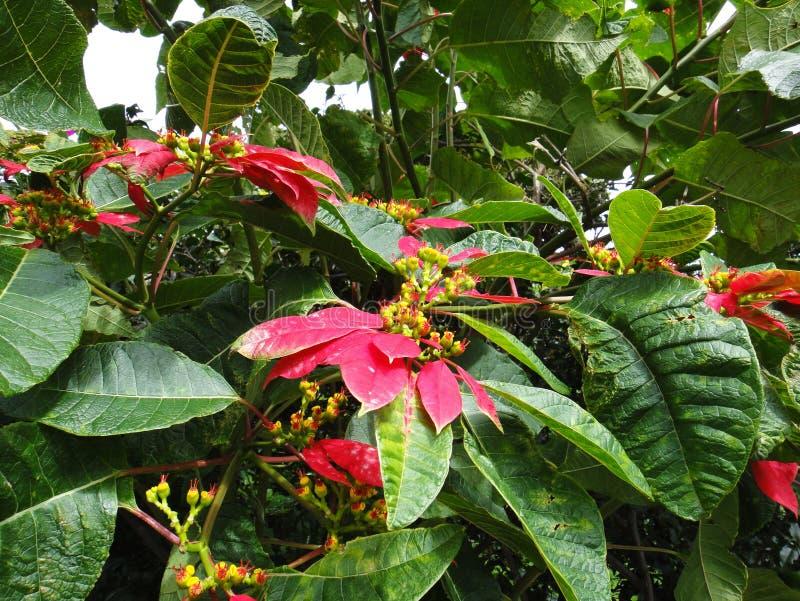 λουλούδια της αγάπης στοκ εικόνες με δικαίωμα ελεύθερης χρήσης