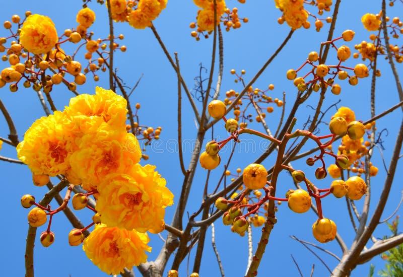 λουλούδια χρυσά στοκ εικόνες με δικαίωμα ελεύθερης χρήσης