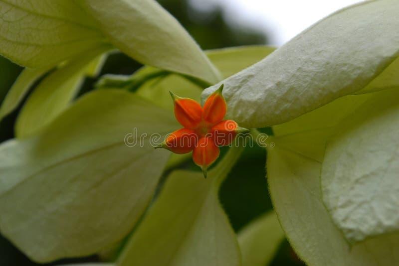 λουλούδι μόνο στοκ εικόνα με δικαίωμα ελεύθερης χρήσης
