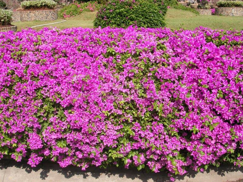 λουλούδι φρέσκο στοκ φωτογραφίες με δικαίωμα ελεύθερης χρήσης