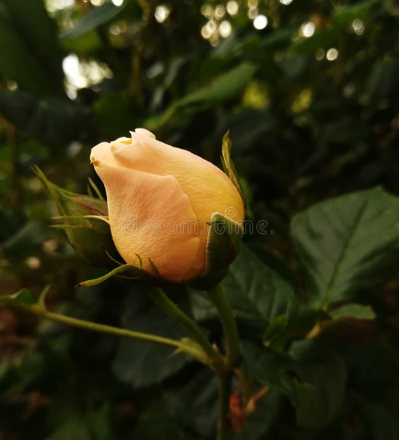 Οφθαλμός λουλουδιού μεταξύ των πράσινων grases στοκ εικόνα